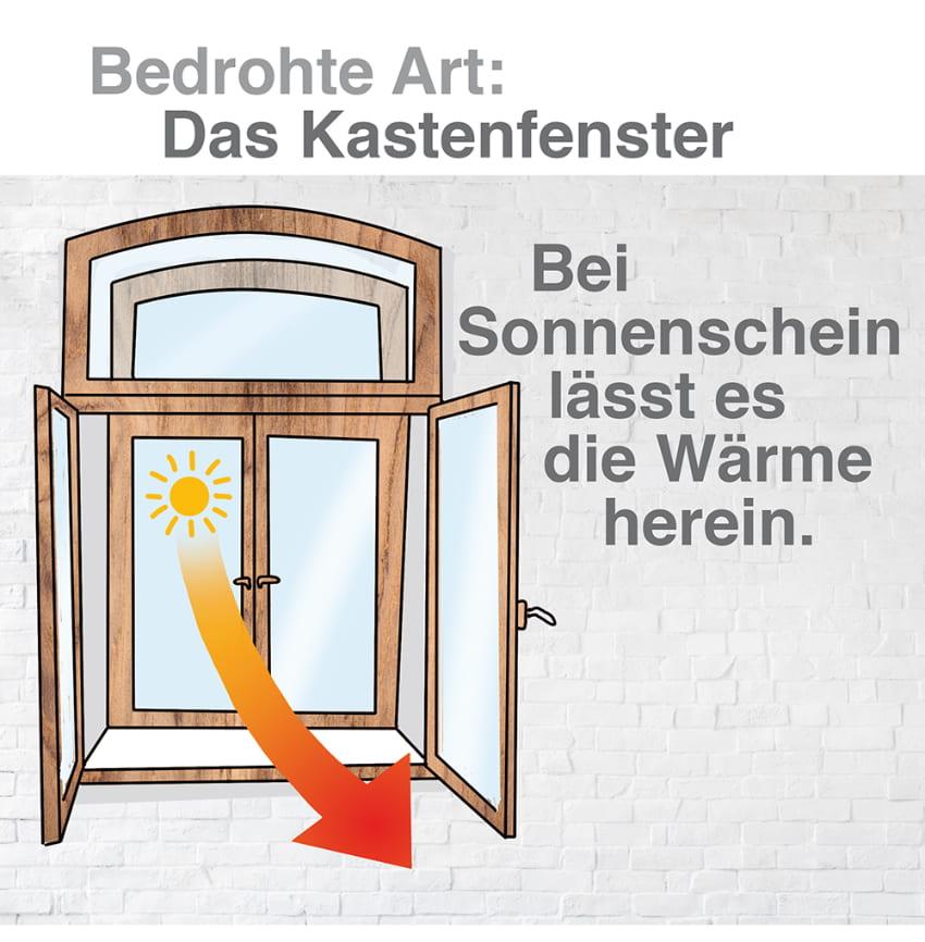 Kastenfenster: Bei Sonnenschein lässt es die Wärme herein