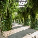 Wie bepflanze ich meine Pergola richtig?
