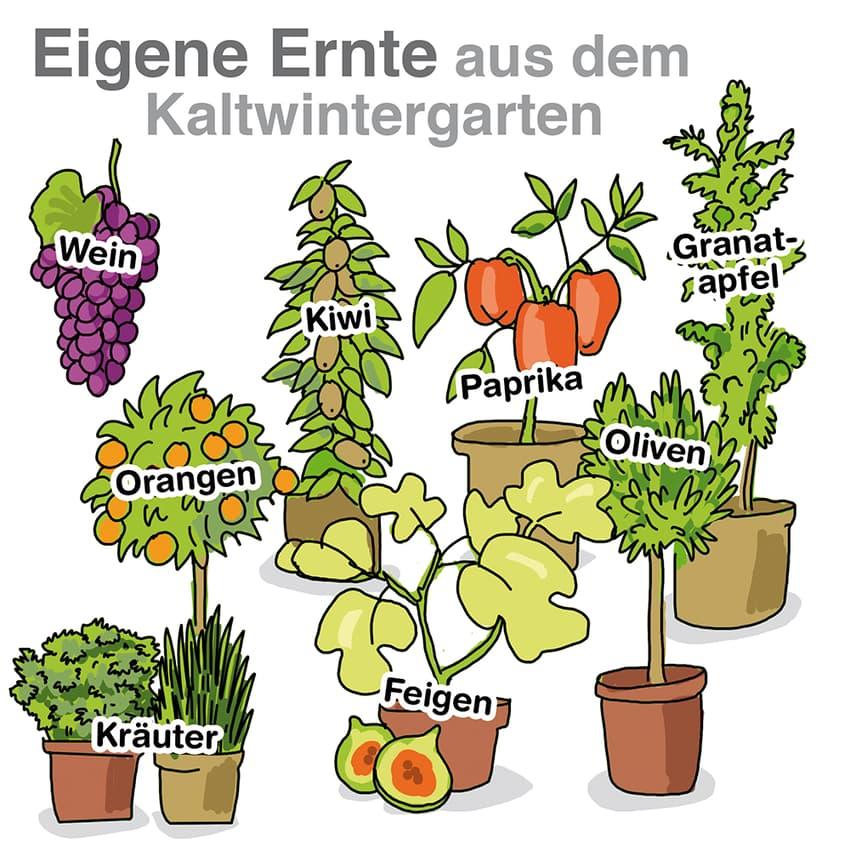 Eigene Ernte aus dem Kaltwintergarten