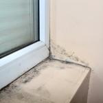 Steigt durch neue Fenster die Schimmelgefahr?