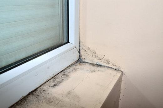 Schimmelbildung am Fenster © branislav, fotolia.com