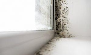 Schimmelbildung am Fenster vermeiden