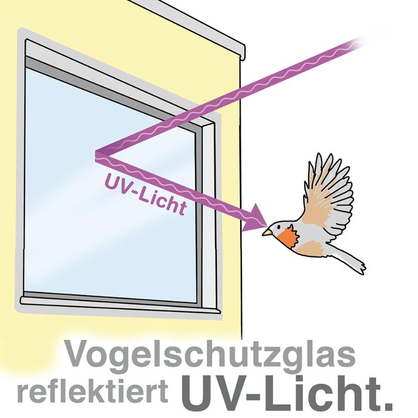 Vogelschutzglas reflektiert UV-Licht