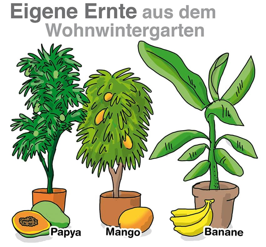Eigene Ernte aus dem Wohnwintergarten